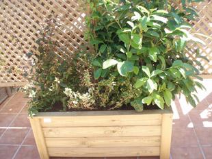 jardineria terrassa